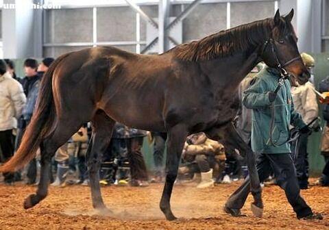 【競馬】バゴとかいう名種牡馬
