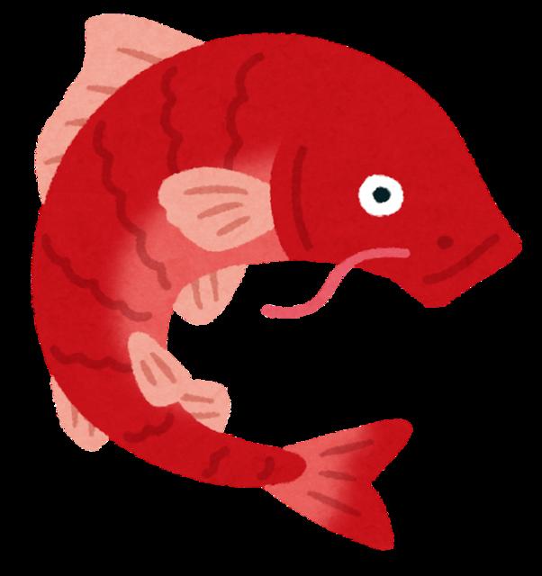 【画像】近所の川に魚が大量発生してるんだが…これ食っていいの?