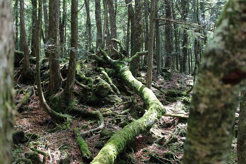 【樹海考】青木ヶ原樹海の写真貼ってく【村田らむ】
