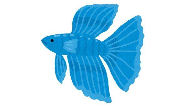 「熱帯魚のベタをコップで飼うのはやめて」ツイートで注意喚起