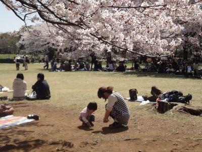 桜のしたでロマンスw_400