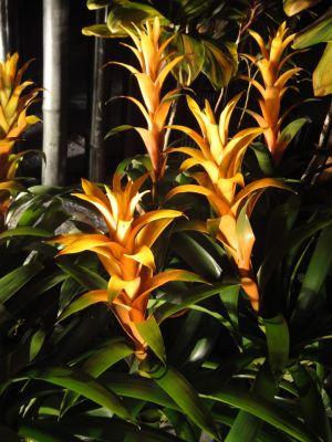 パイナップルの花_400