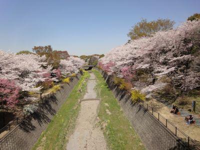 桜~!_400