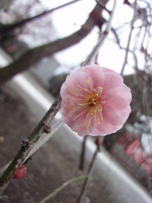 春よこい♪_400