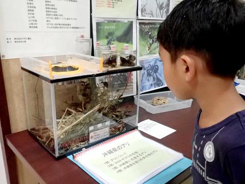 「おきなわのアリから見る生物の多様性」