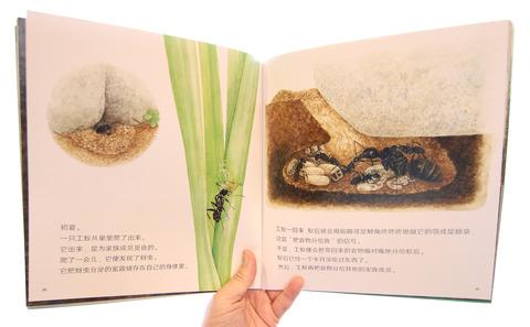 かがくのとも「アリのかぞく」中国版