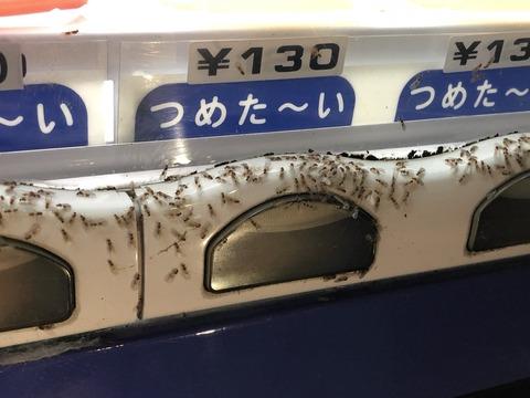 キイロシリアゲアリ 自販機