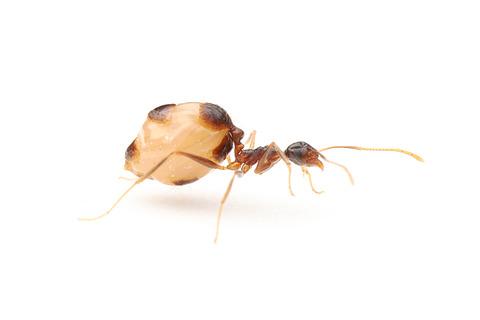 線虫メルミス