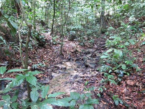 マレーシアの森