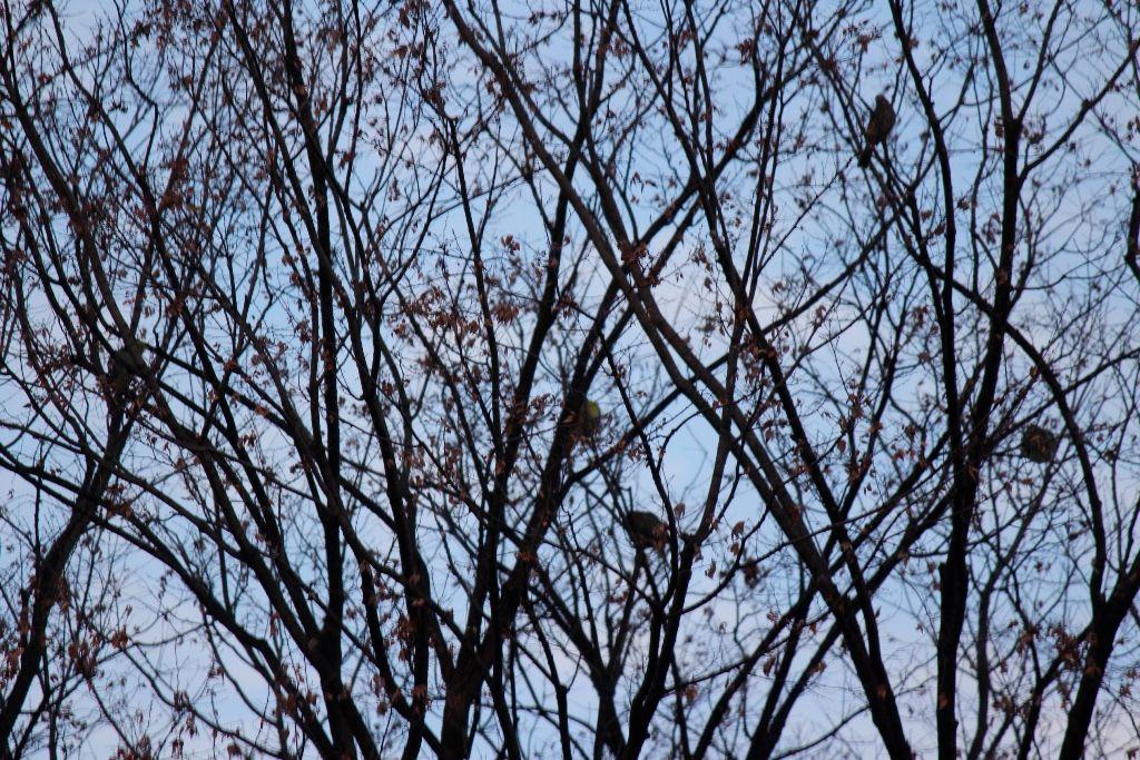 2落葉樹アオバト