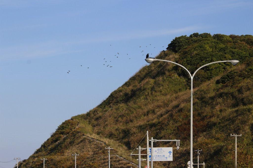 道の駅みついし2km看板の後ろに飛ぶアオバト