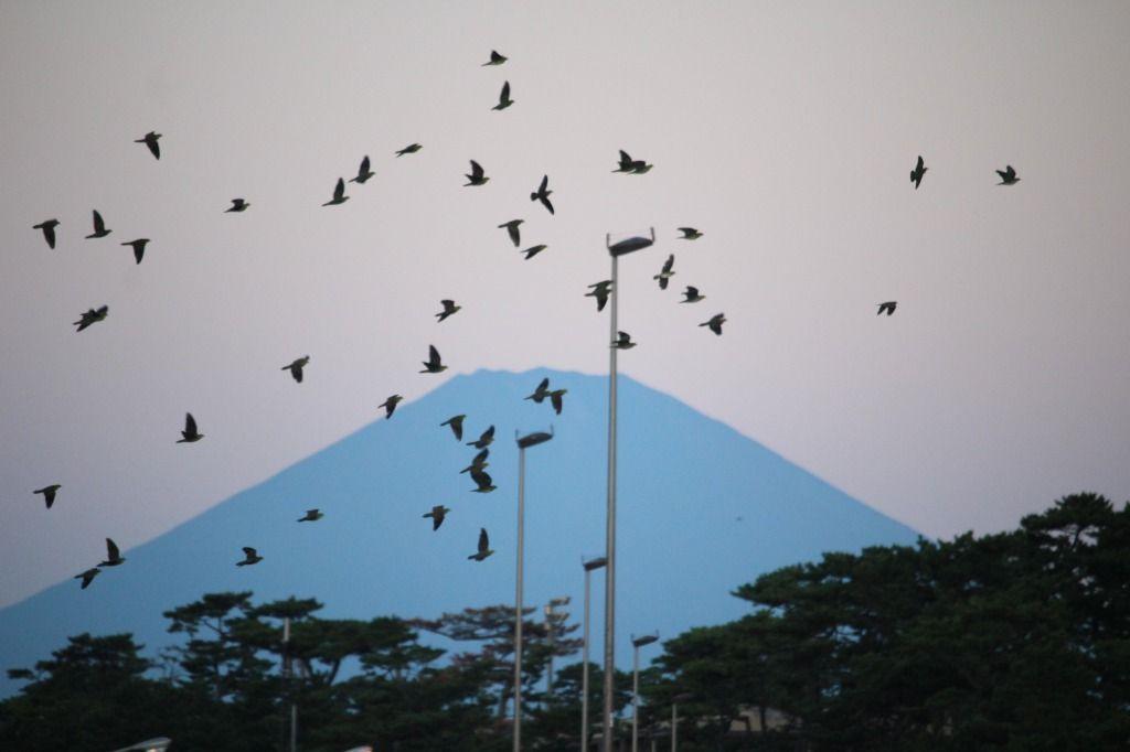 2018.9.28富士山と200羽超えの群れ