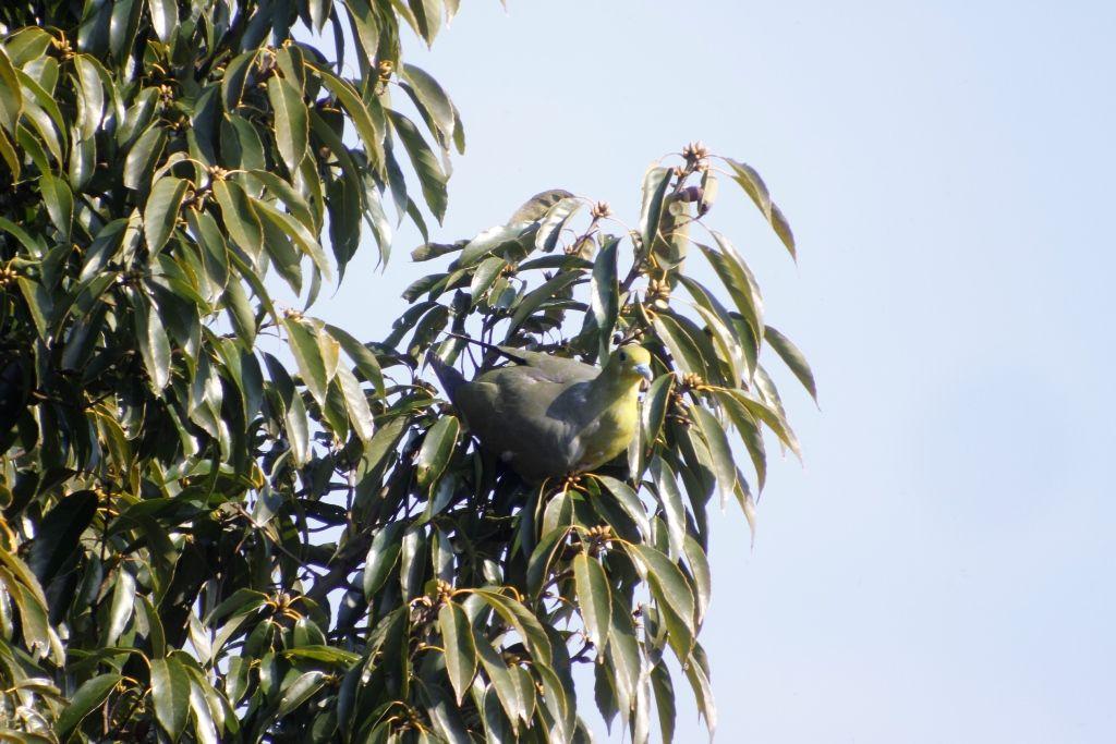 23回目樹上採餌♀(3)
