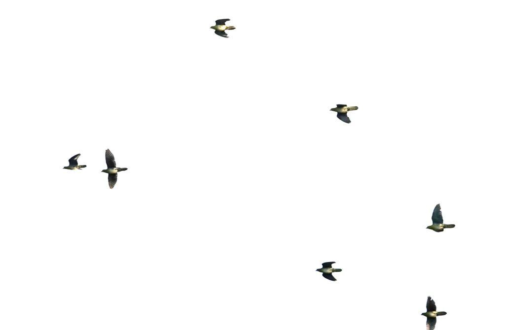 飛んでいく群れ