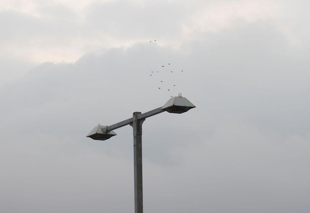 22高い位置に飛ぶアオバト