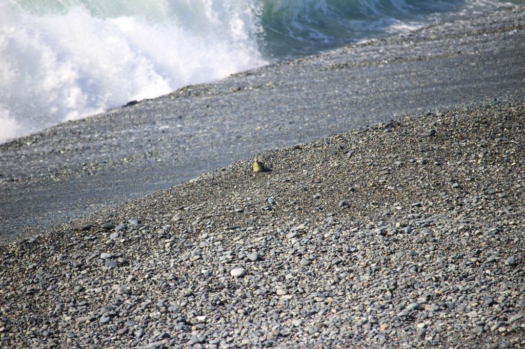 2018.9.28波にのまれた♀が海岸へ