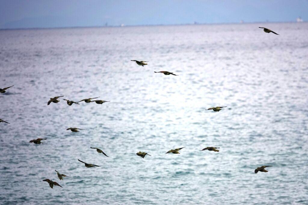 海上を飛ぶ群れ