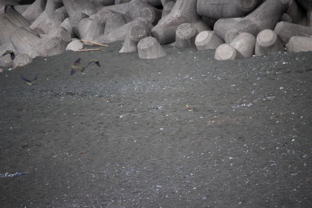 8テトラ前の浜辺におりた