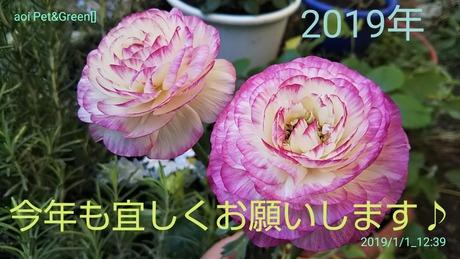 20190101_1422_18426