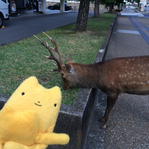 フモフモさん お散歩ブログ 奈良県庁 鹿