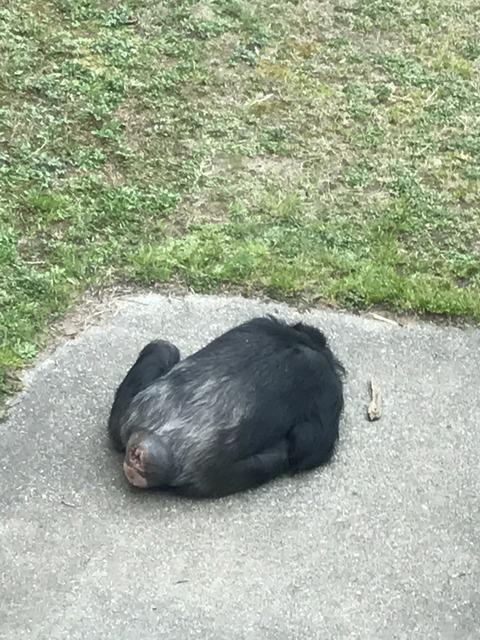 フモフモさん お散歩ブログ 神戸市立王子動物園