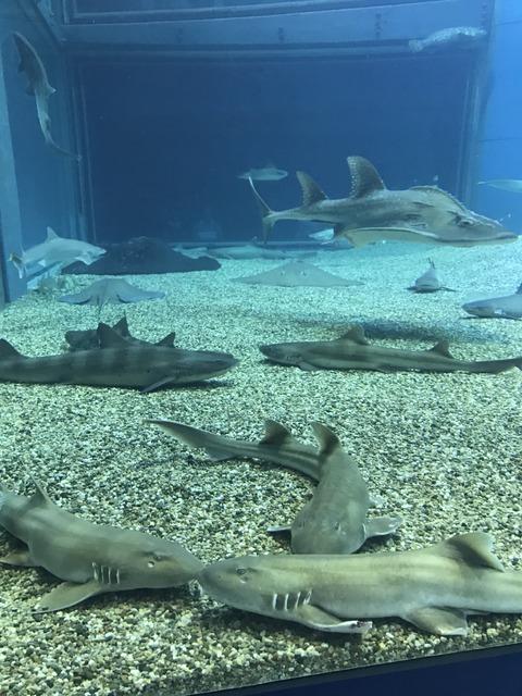 フモフモさん お散歩ブログ 海遊館 水族館