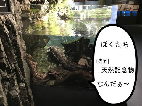フモフモさん お散歩ブログ 京都水族館