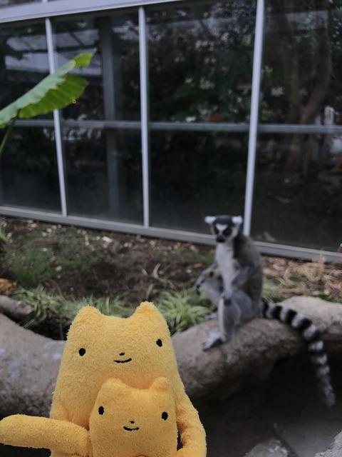 フモフモさん お散歩ブログ 神戸どうぶつ王国