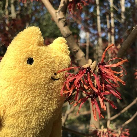 フモフモさん お散歩ブログ 花の文化園 こたつ