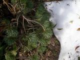 お庭の残雪