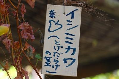イシミカワ (23)
