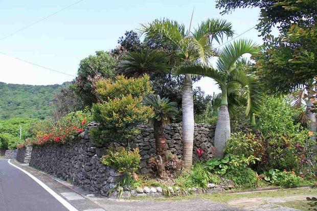 喜界島 (225)
