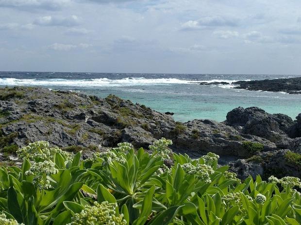 喜界島 (199)ハワイビーチ・モンパノキ