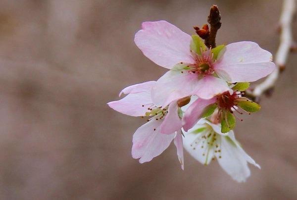 040桜色がバック