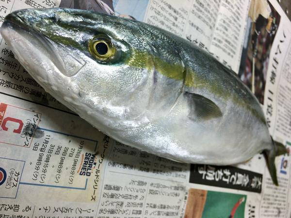 20161029fukuragisiokouji01
