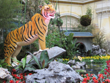 Tiger_2010