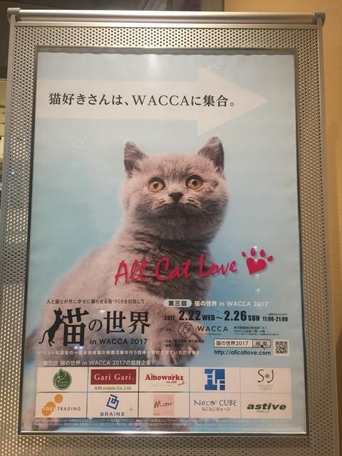 WACCA 猫の世界