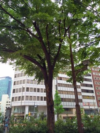 宮益坂の街路樹
