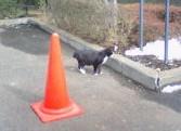 黒猫赤コーン