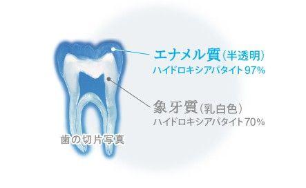 アパガードエナメル質象牙質