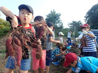 1002芋掘り (9)