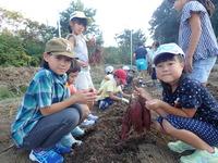 1002芋掘り (10)