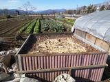 堆肥白菜ブロッコリー