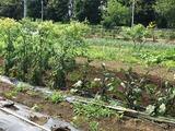 (6)茄子とトマト
