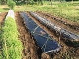 (3)後作そら豆用の畝