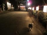 阿蘇神社-1
