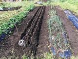 (1)じゃが芋の植付け