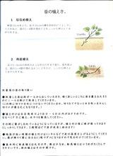 (5)安納芋-1
