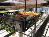 (6)ベランダ天井の野菜ストッカーへ