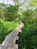 ウトナイ湖木道